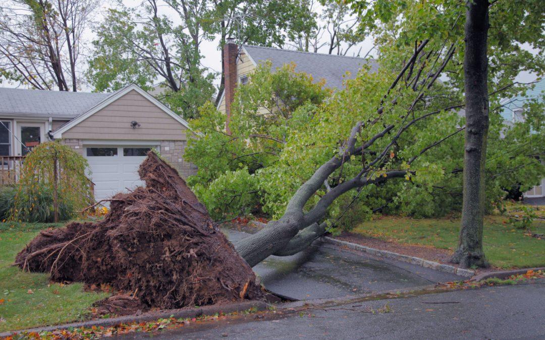 My Neighbor's Tree Fell Into My Yard. Who Is Responsible?